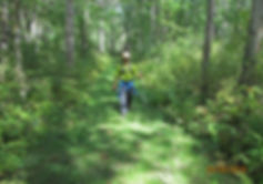 Naimul Karim Naim personal website photography up north Minnesota forest relax nature hiking green forest