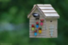 Naimul Karim Naim personal website photgraphy backychird chikadee nest nestng songbird peekaboo