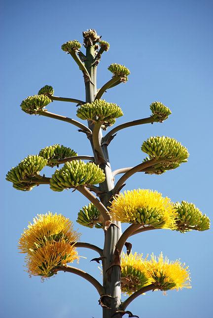 Naimul Karim Naim personal website photography Cactus Garden Arizona blue sky yellow flower