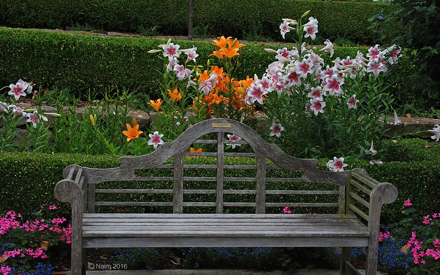 Naimul Karim Naim personal website photography Dallas Botanical Garden Texas park bench invtatio to linger