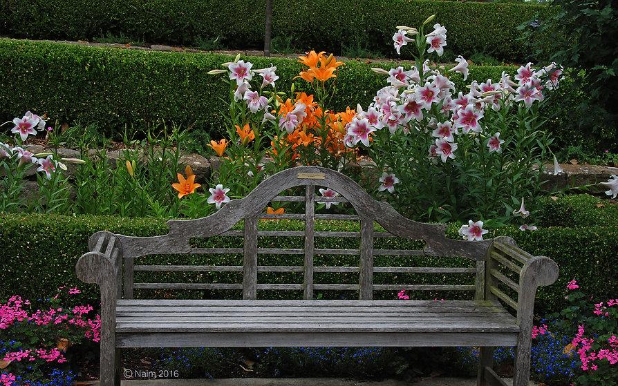 Naimul Karim Naim personal website photography Dallas Botanical Garden Texas park bench invtatio to linger