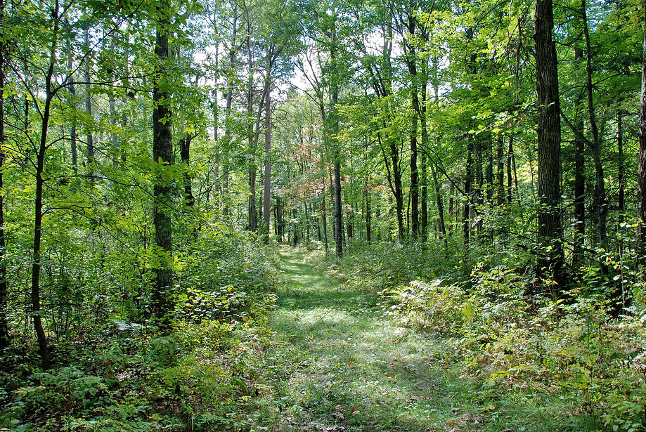 Naimul Karim Naim personal website photgraphy summer Minnesota nature green forest shinrin-yoku