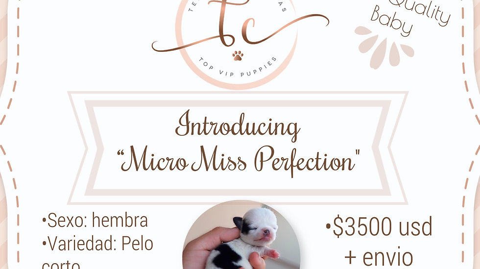 Micro Miss Perfection