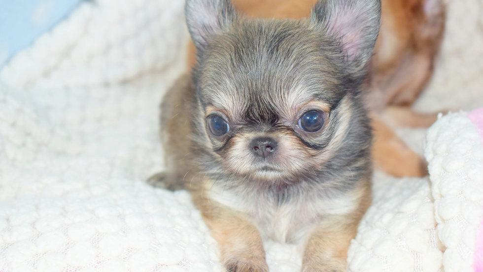 Baby lio