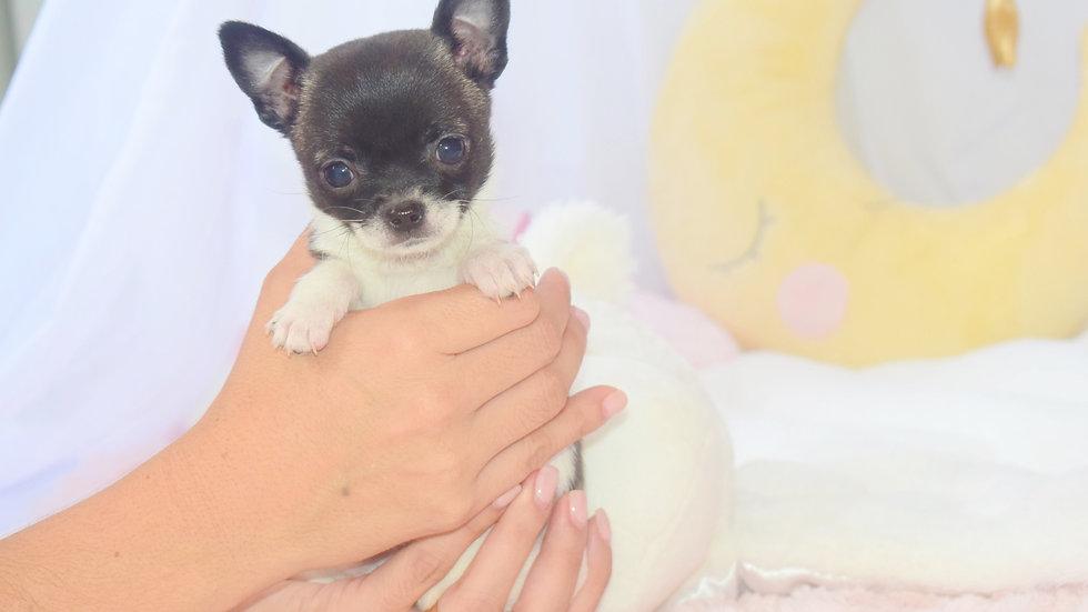 Mini Mousy