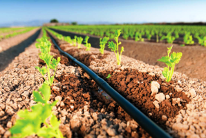Sistema de Riego para una Huerta agro-ecológica