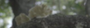 vlcsnap-2019-07-07-22h11m30s309.png