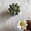 Thumbnail: Pot de fleur • Matin de Camping 🏕