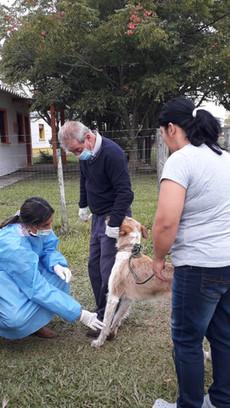Toma de muestras de sangre canina