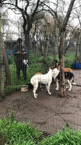 Jornada de dosificación canina en la Protectora Francisco de Asis