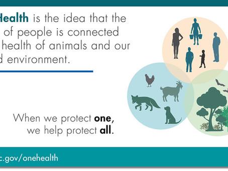 One Health, COVID-19 and Wildlife Rehabilitation