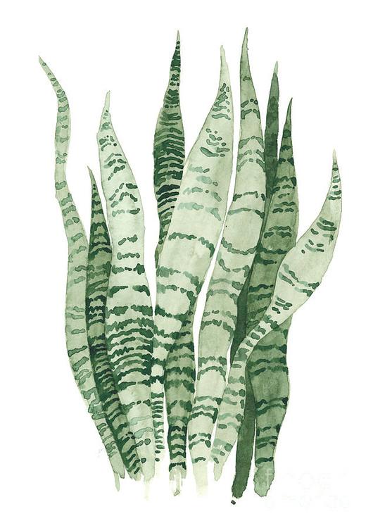 sansevieria-snake-plant-joanna-szmerdt.j