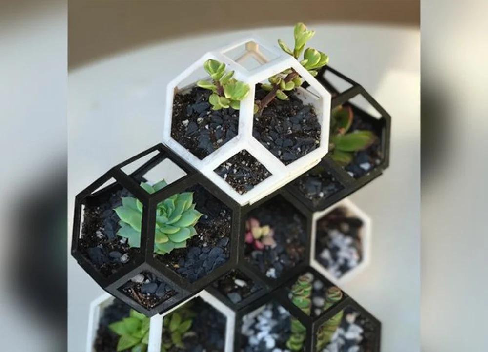 Plantygon