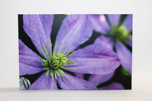 Small Flower Canvas Print