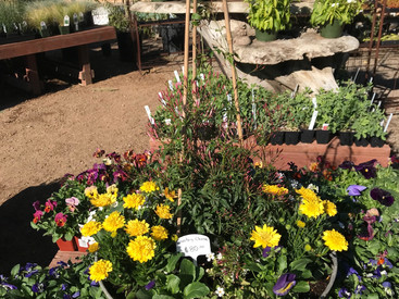 Galvanized Tin Garden
