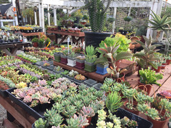 Garden-Store-Encinitas-Succulents-Cactus-