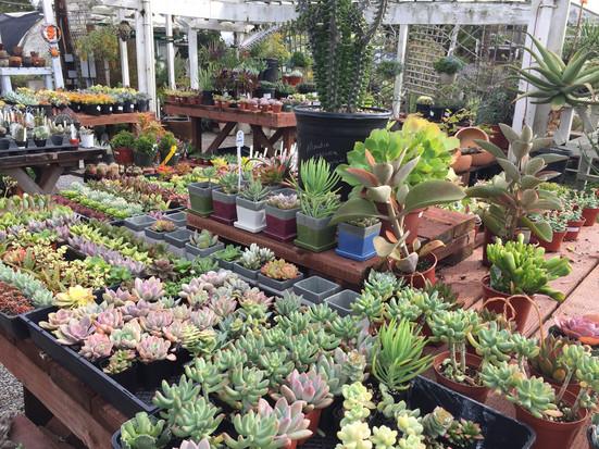 Succulents & Cactus
