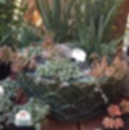 Encinitas CA Garden Nursery Store near San Diego, CA