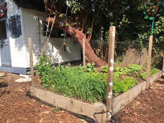 Anderson's Veggie Garden