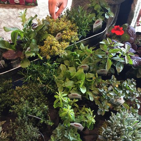 """4"""" Herb Pots"""