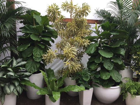 Indoor Houseplant Collection