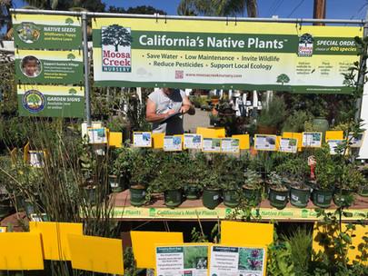 Moosa Creek Nursery California Native Plants