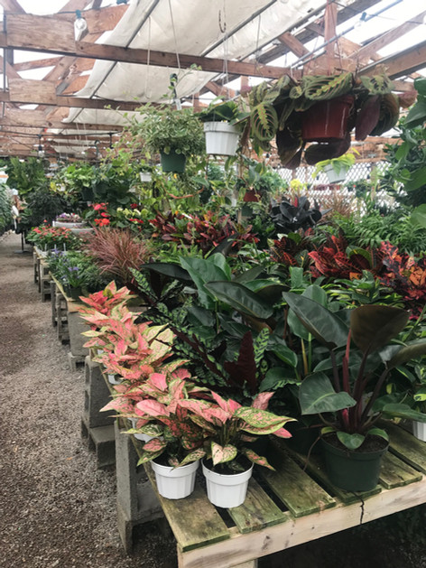 Indoor Greenhouse Tabletop