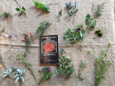 San Diego Native Wild Flowers