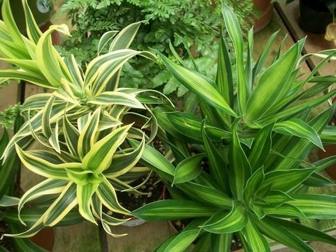 Healthy Houseplants