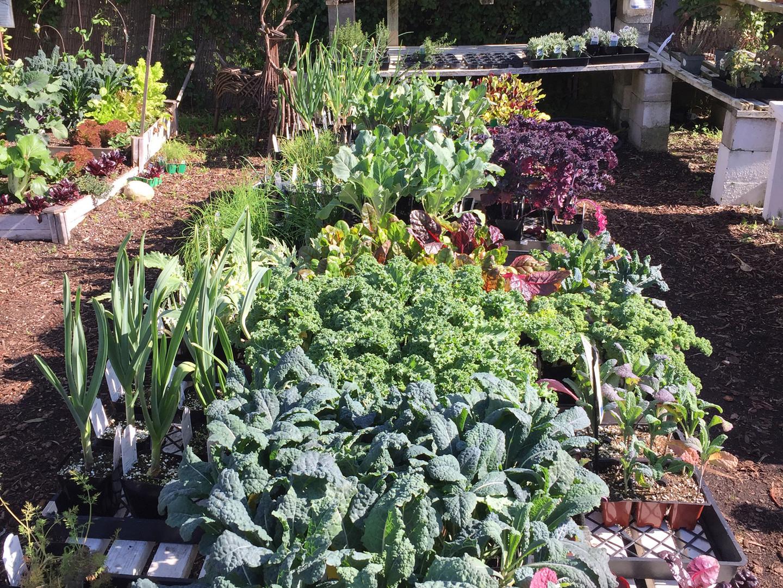 Grow your own organic edibles!
