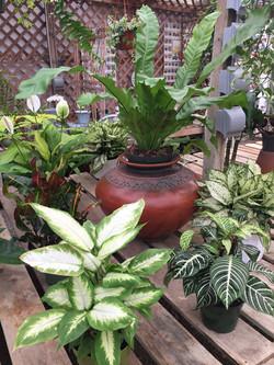 Houseplant-Store-Encinitas-California