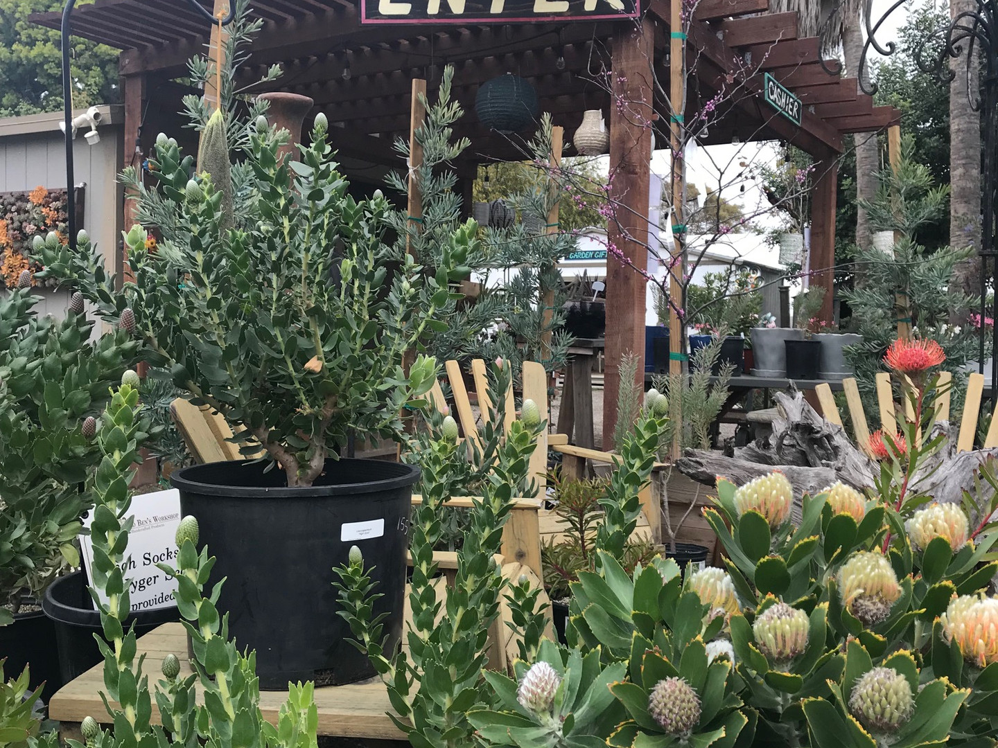 Nursery Entry with Protea