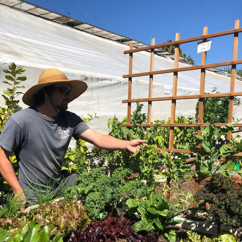 Steven and the Victory Garden.jpeg