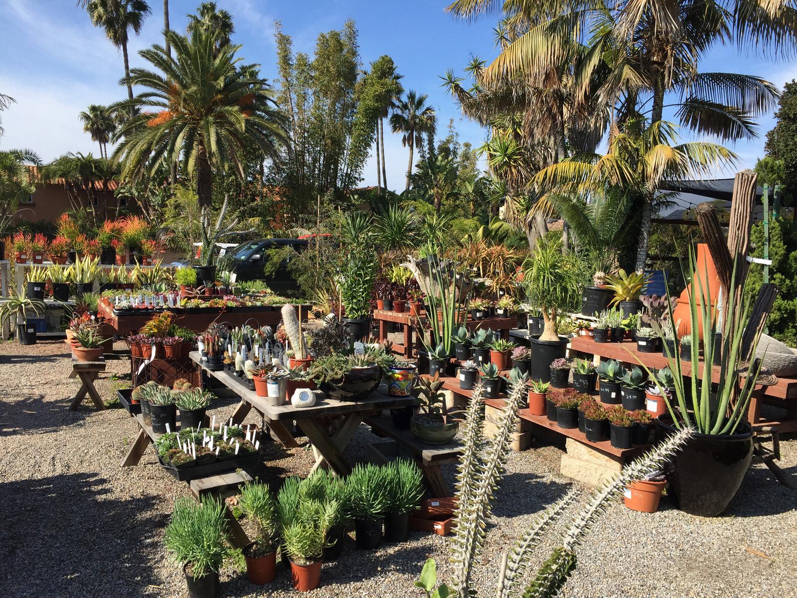 Anderson S Veggie Garden Cactus Succulents
