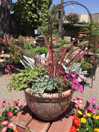 Mixed Sun Container
