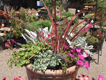 Mixed Color Container