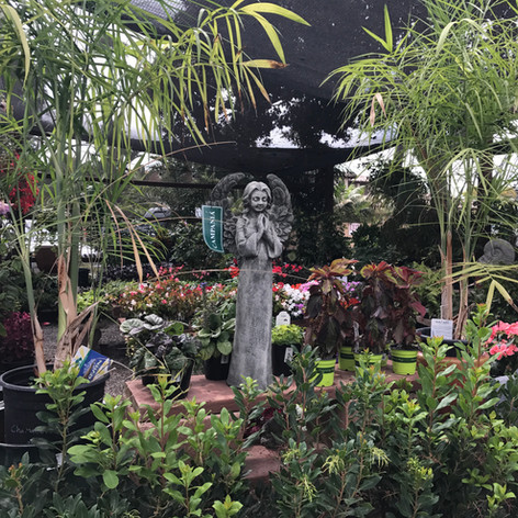 Angel with Plants for Part Shade