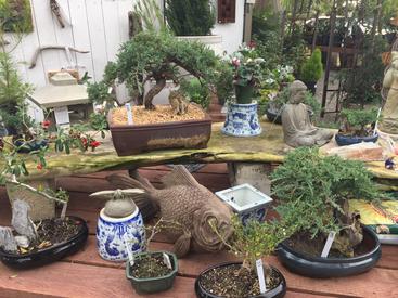 Bonsai Makes Great Garden Gifts