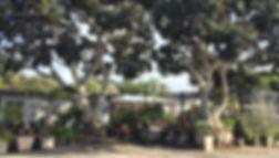 North County San Diego Nursery - Encinitas, CA