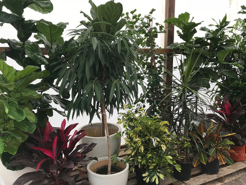 Potted Floor Plants