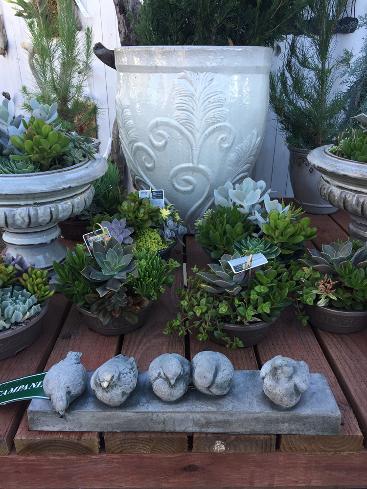Garden-Store-Encinitas-Gifts-Potted-Plants