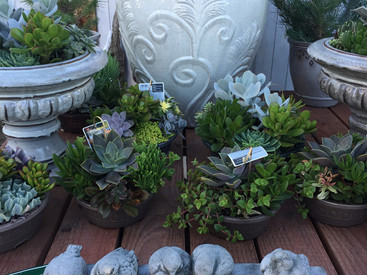 Pottery & Garden Decor