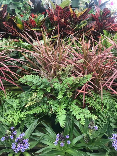 Small Indoor Greenhouse Plants