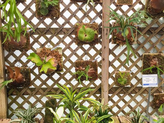 Garden Gifts & Ideas
