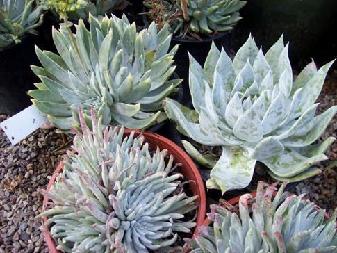 Unusual Succulents