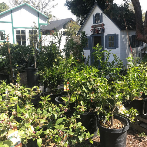 Fruit Trees in the Secret Garden
