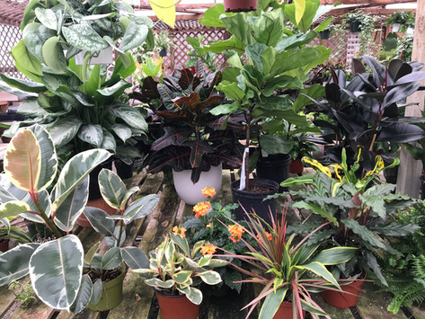 Lots of Tropical!
