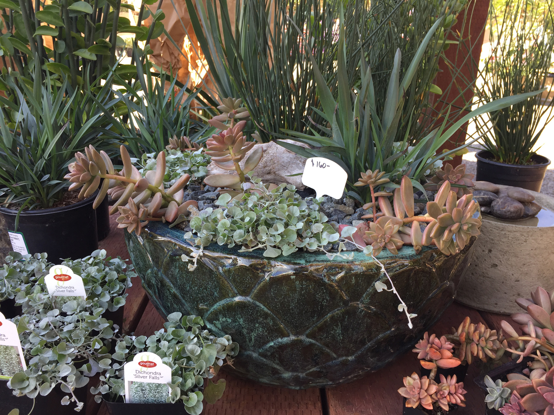 Garden-Store-Potted-Plants-Encinitas-California