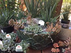 Garden-Store-Potted-Plants-Encinitas-California