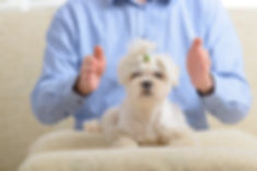 Man doing Reiki therapy for a dog, a kin